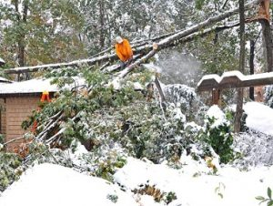 check tree limbs in danger of coming down onto your roof