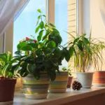 Houseplants can help purify the air.